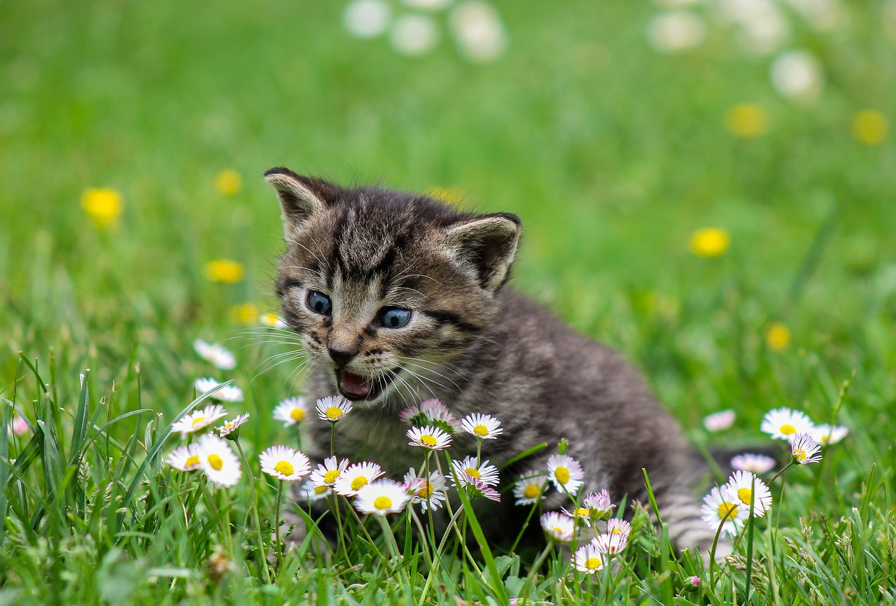 Excellent Recommendations On Kittens and cats That Are Really Easy To Stick to
